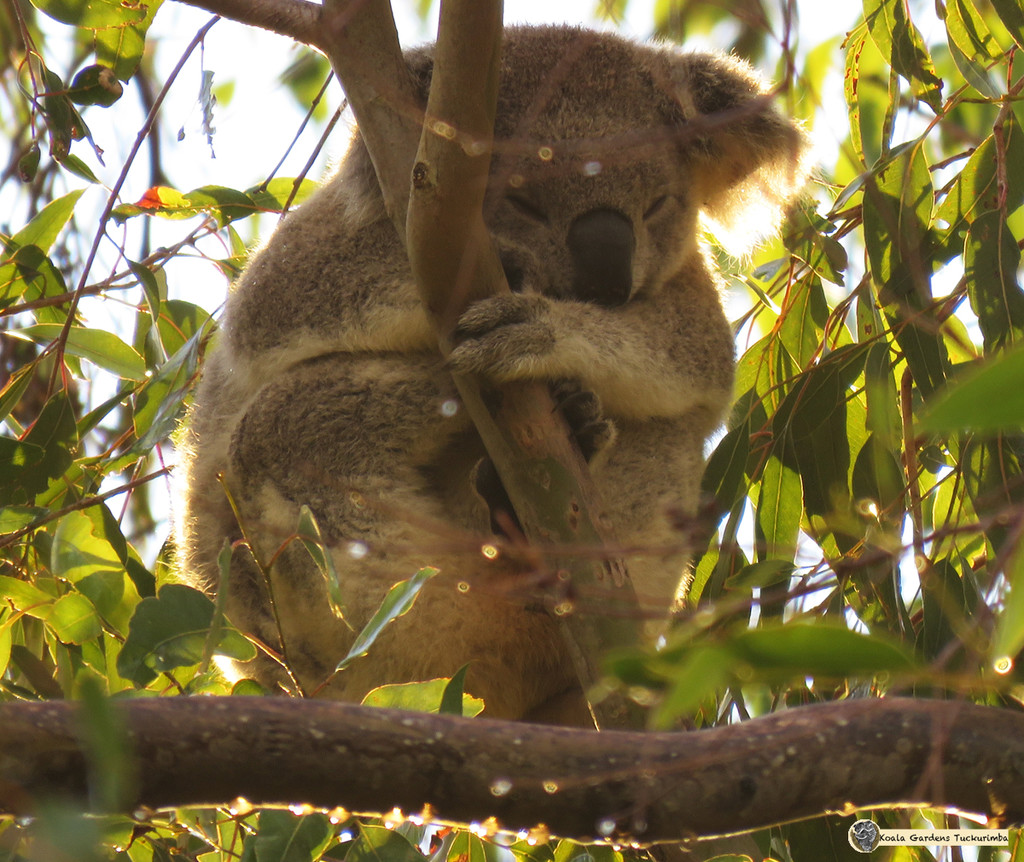sparkling dew by koalagardens