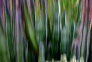 9th May 2017 - cacti