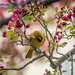 Colorful bird and colorful flowers by joansmor