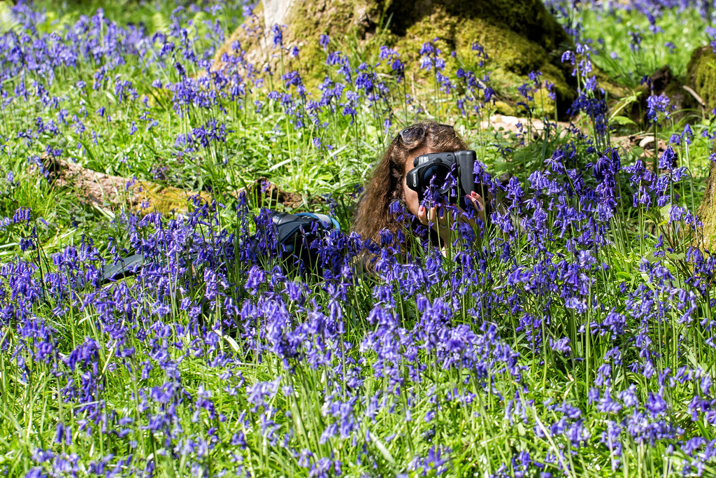 Pixie in the Bluebells by pamknowler