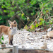 Fox Cubs by padlock