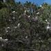 Egret Tree