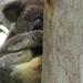 Half and Half by koalagardens