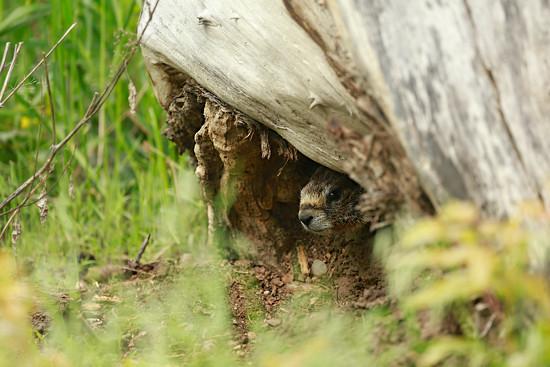 Peeking Out by gq