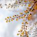 Pretty Branch! by fayefaye