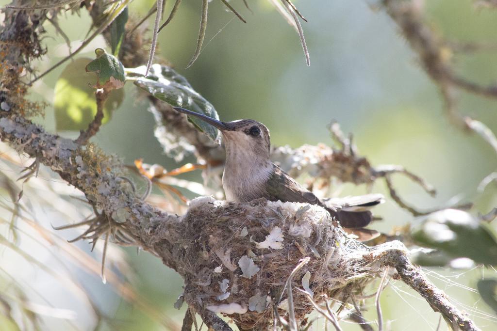 My First Hummingbird Nest by gaylewood