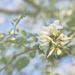 Springtime Ornaments by lyndemc