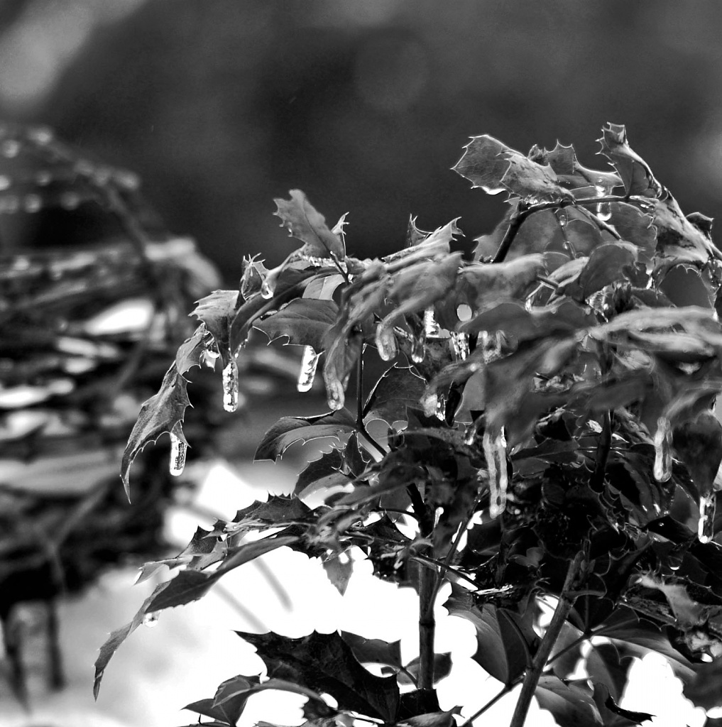 Black & white winter by parisouailleurs