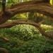 Wild Garlic Woods by fbailey