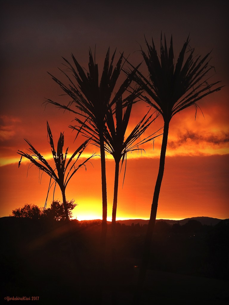 Cabbage tree silhoutte by yorkshirekiwi