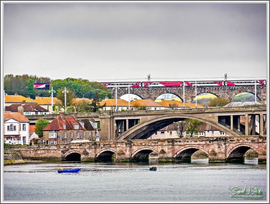Three Bridges Across The River Tweed by carolmw
