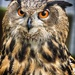 Eagle Owl. by gamelee