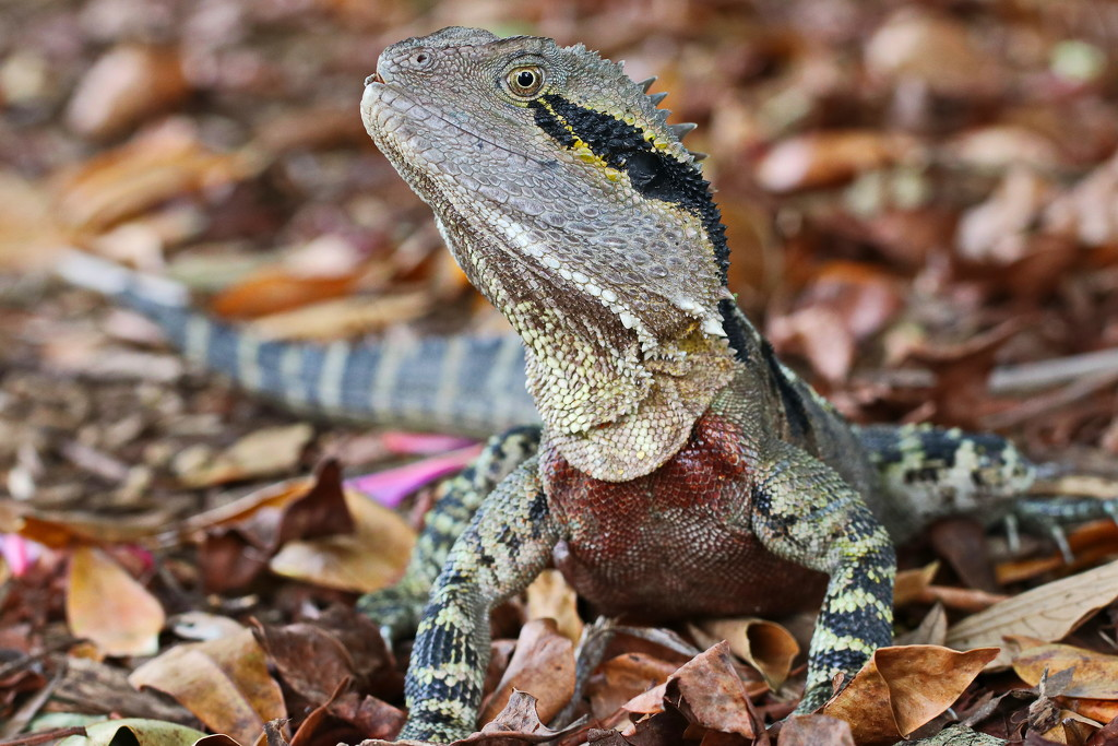 Eastern Water Dragon by terryliv