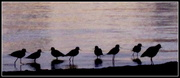 16th May 2017 - Birds in the early morning