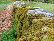 16th May 2017 - Dry Stone Wall And Moss