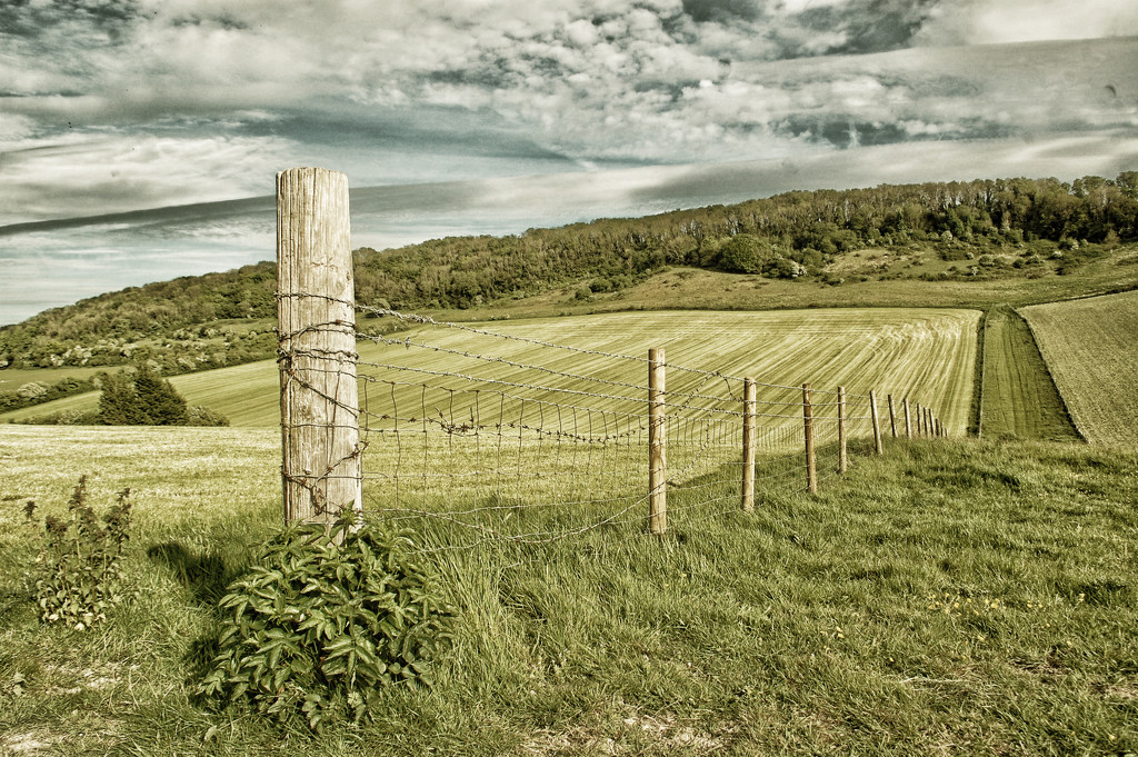 Tractor lines by fbailey