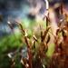 Moss by m2016