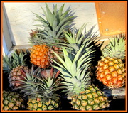 18th May 2017 - Fresh Pineapples $1.00 each.