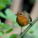 WORKING IN THE GARDEN, AND ROBIN CAME TOO- THREE by markp