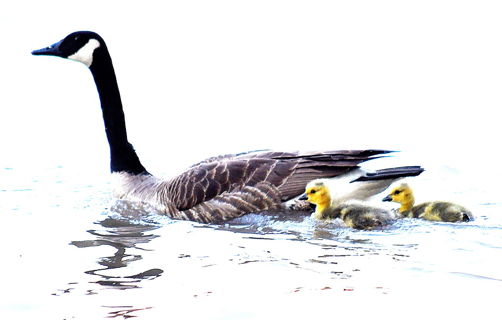 Mama and Her Two by kareenking