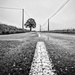 PLAY May - Sony 16mm f/2.8: Trees & Posts & Lines by vignouse