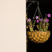 Petunia Basket by salza