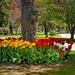 Tulip time by joansmor