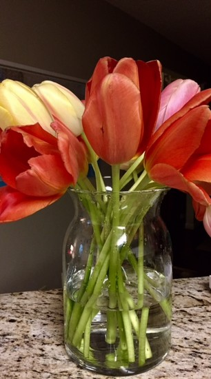 More Tulips by suelbiz47