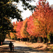Autumn in the Boland by mv_wolfie