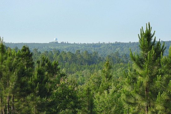 View across the Pines! by homeschoolmom
