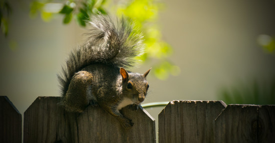 Squirrel Resting! by rickster549