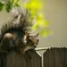 Squirrel Resting!