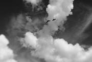 20th May 2017 - fly