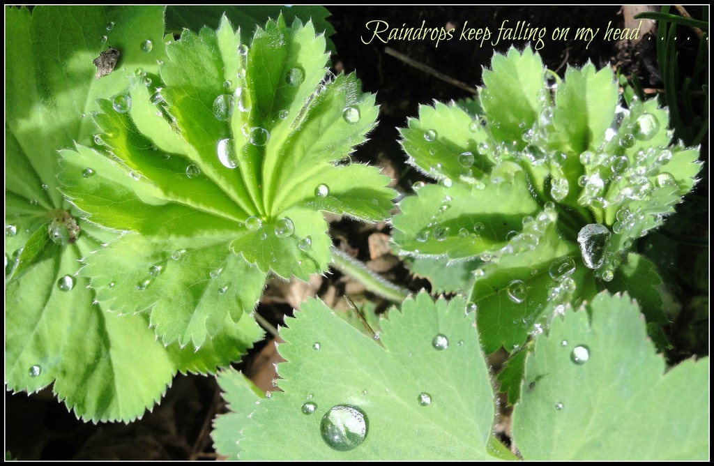 Raindrops . . . .  by beryl