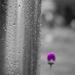 Simplicity by dorsethelen