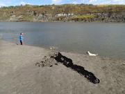 20th Sep 2016 - North Saskatchewan River at Terwillegar Park