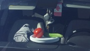 27th Sep 2016 - Still Life on the Dashboard