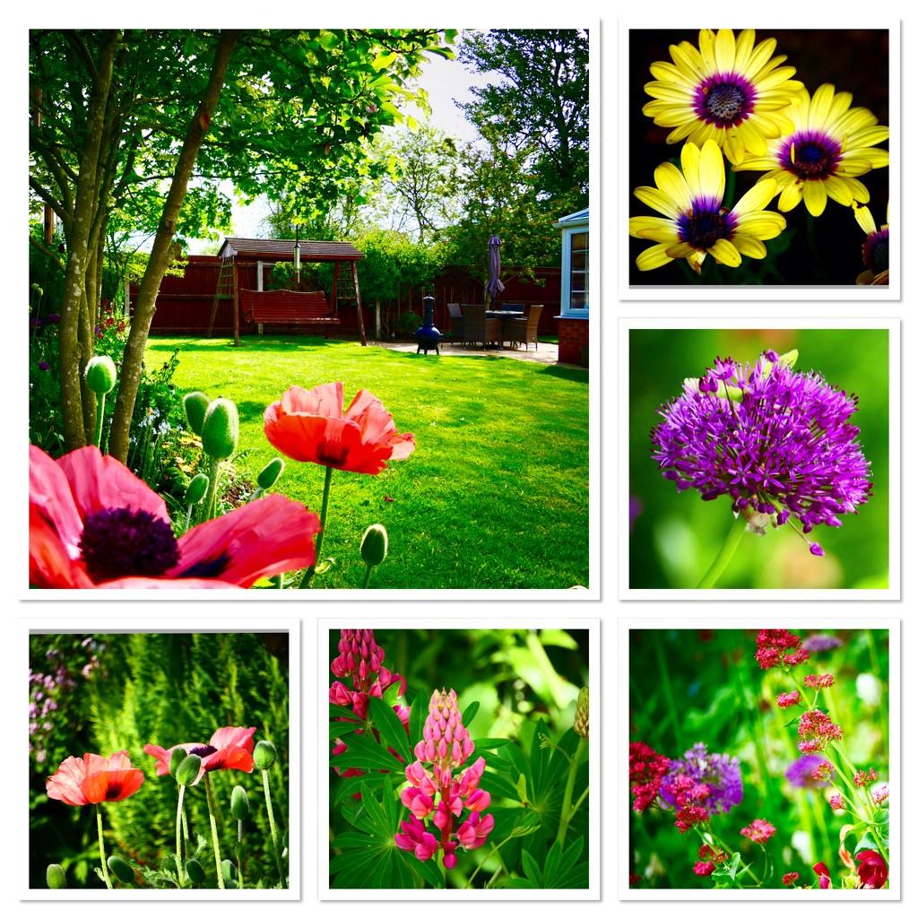 Garden Montage by carole_sandford