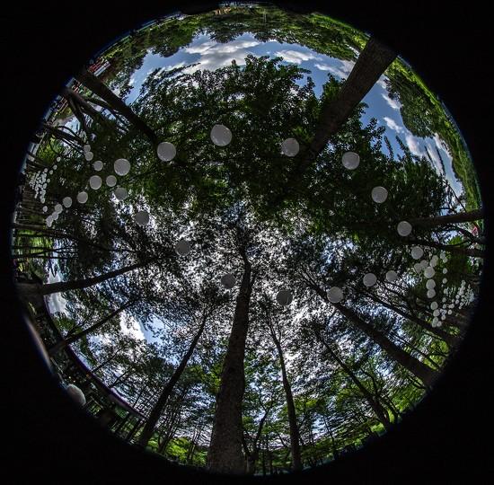 Nami Island:  Trees, Books, Recycling by jyokota
