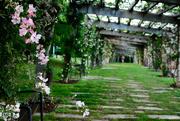 22nd May 2017 - Cervantes Garden