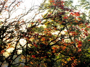 23rd May 2017 - Autumn leaves in the morning sun