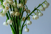 19th May 2017 - Lily of the Valley Close Up III