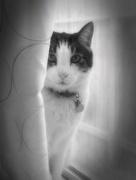 22nd May 2017 - Kitty Kurtains