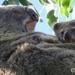 precious moments by koalagardens