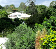 25th May 2017 - Queenslander(House) amongst the sub-tropical growth
