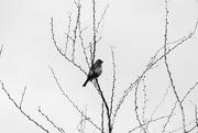 25th May 2017 - birdie