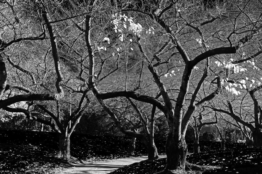 Last leaves by maureenpp