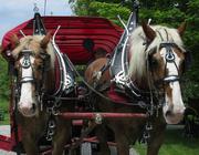 25th May 2017 - Horses