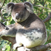 male magic by koalagardens