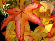 26th May 2017 - The glory of Autumn